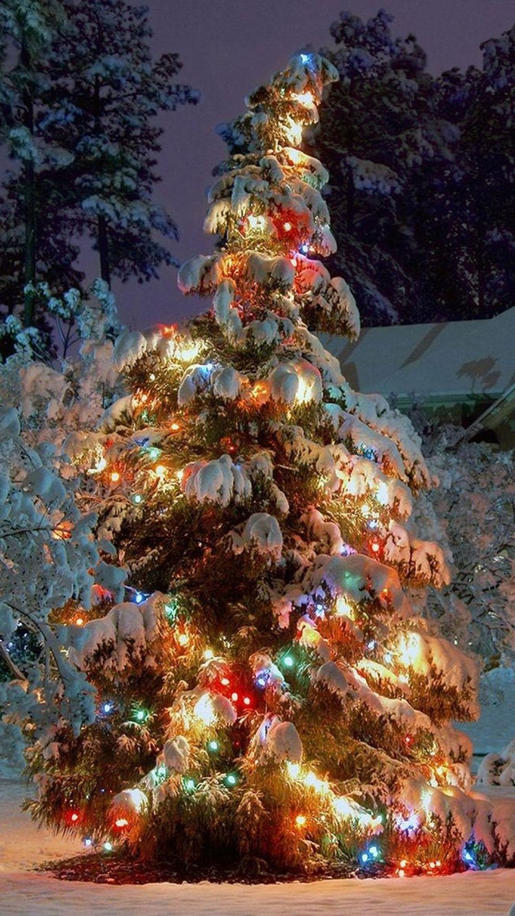 Kinkade christmas ornaments - 588 Best Images About Christmas Scenery On Pinterest Christmas Trees Winter Wonderland And Church