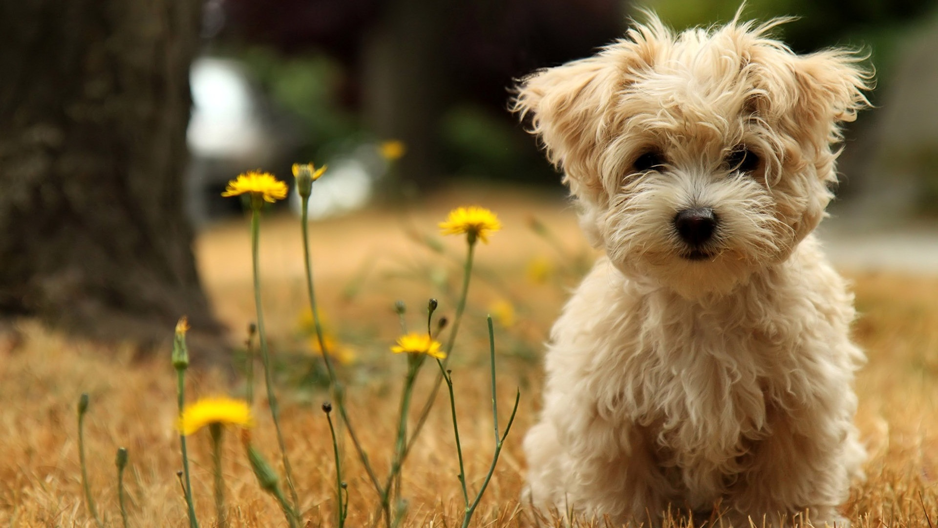 puppy dog wallpaper - photo #6