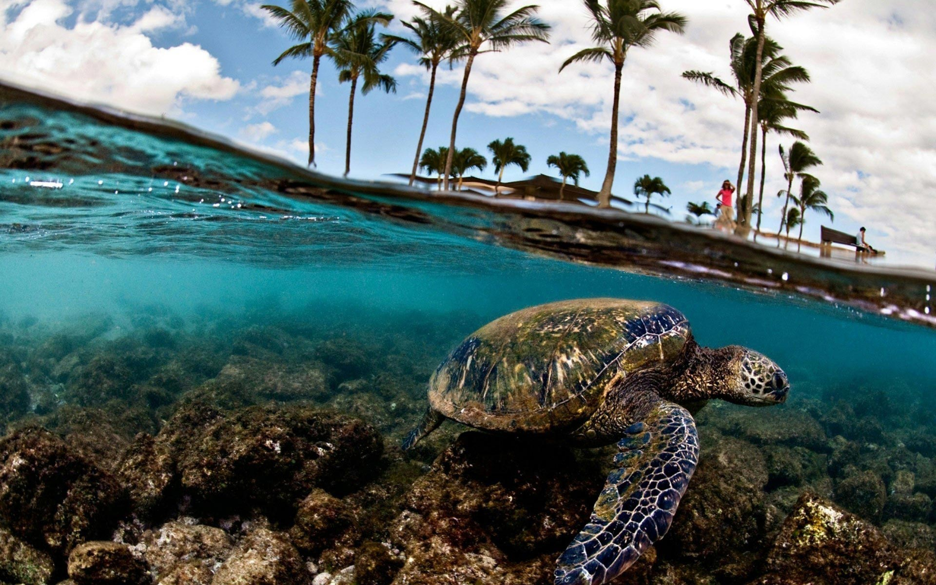 20 tropical backgrounds - photo #19