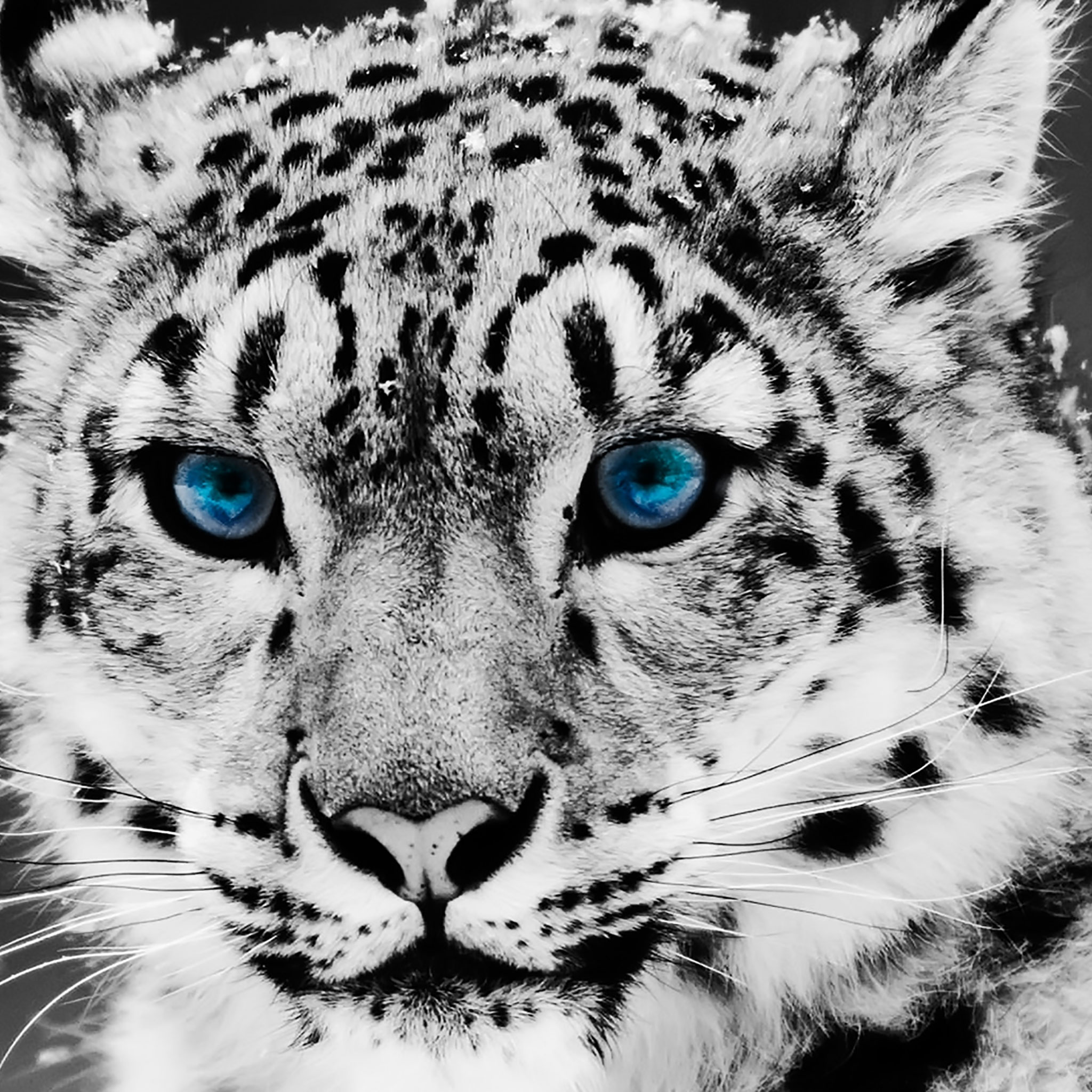 75 hd animals ipad backgrounds