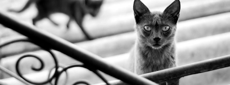 Cat Facebook Cover 20