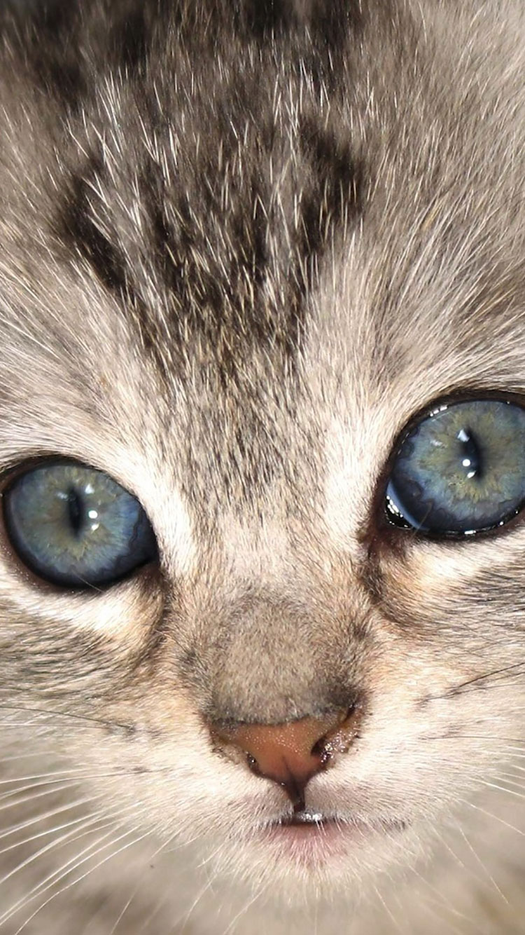 Cat iPhone Wallpaper 12