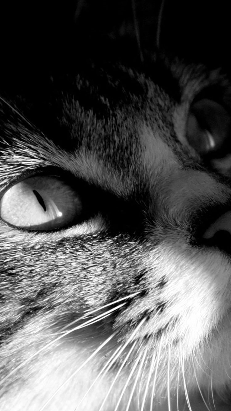 Cat iPhone Wallpaper 4