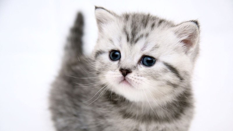 50 free hd cat wallpapers cat wallpaper 2 thecheapjerseys Gallery