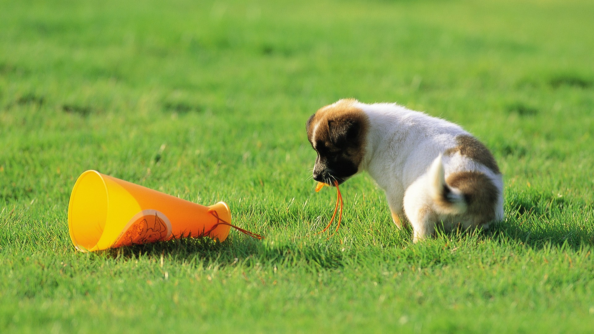 50 free hd dog wallpapers - The cutest wallpaper ...