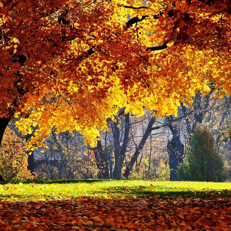 Fall iPad Wallpaper 13
