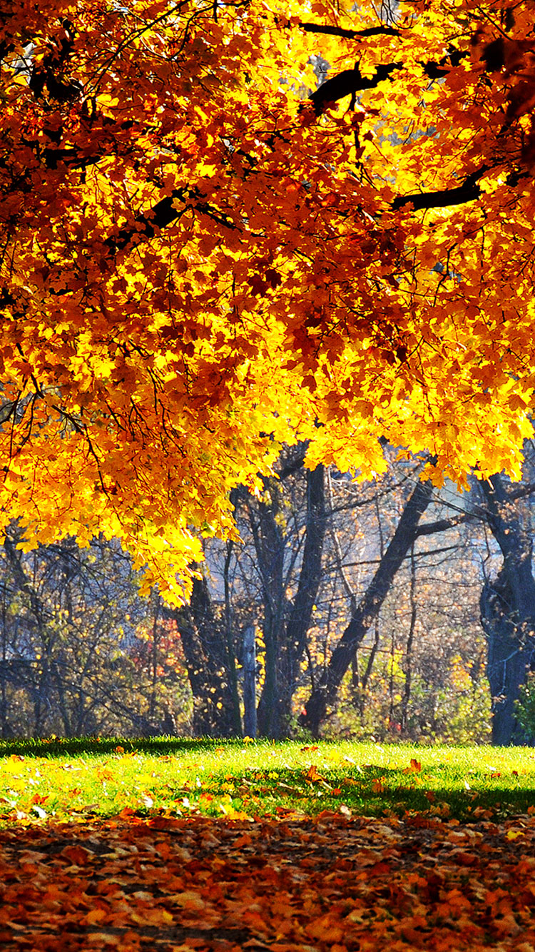 Fall iPhone Wallpaper 13