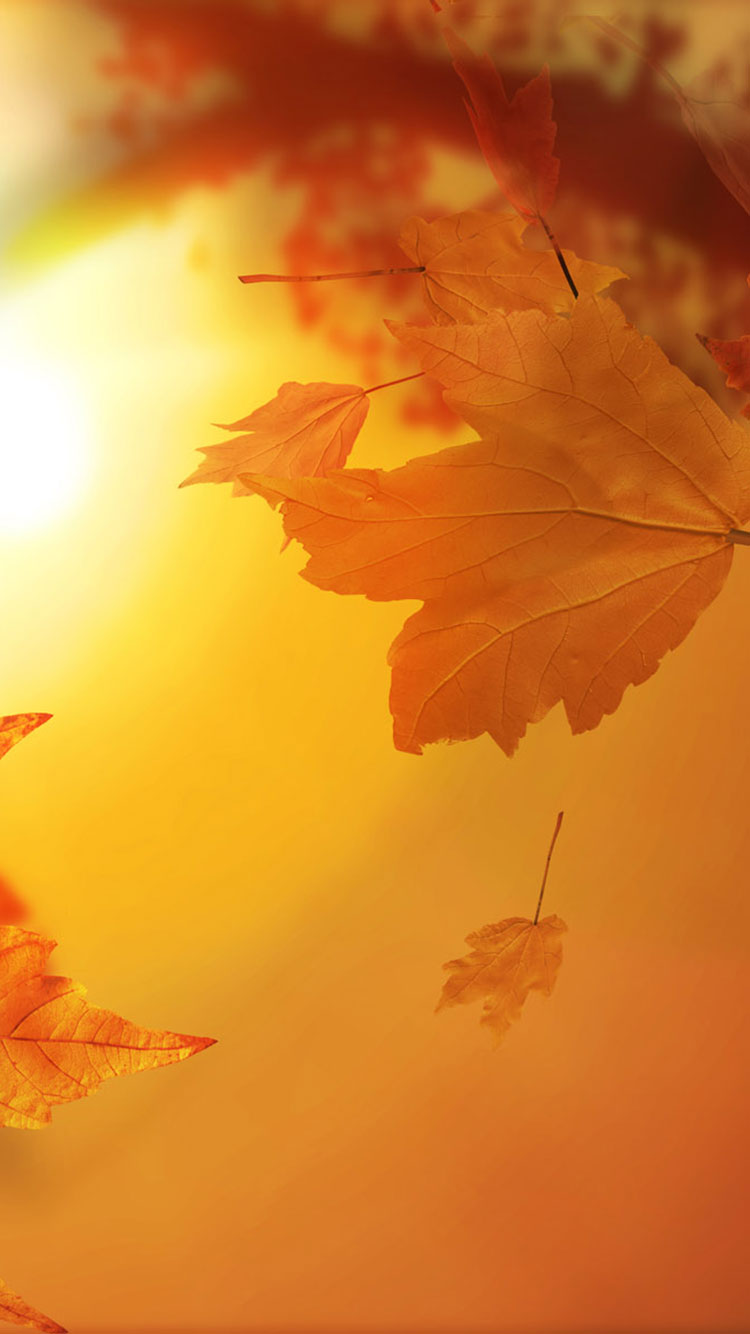 Fall iPhone Wallpaper 18