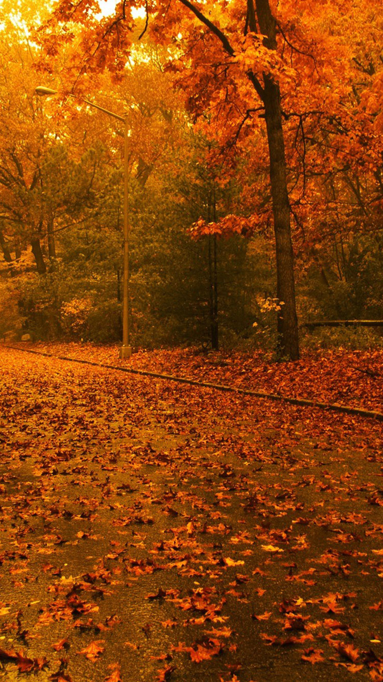 25 fall iphone wallpapers