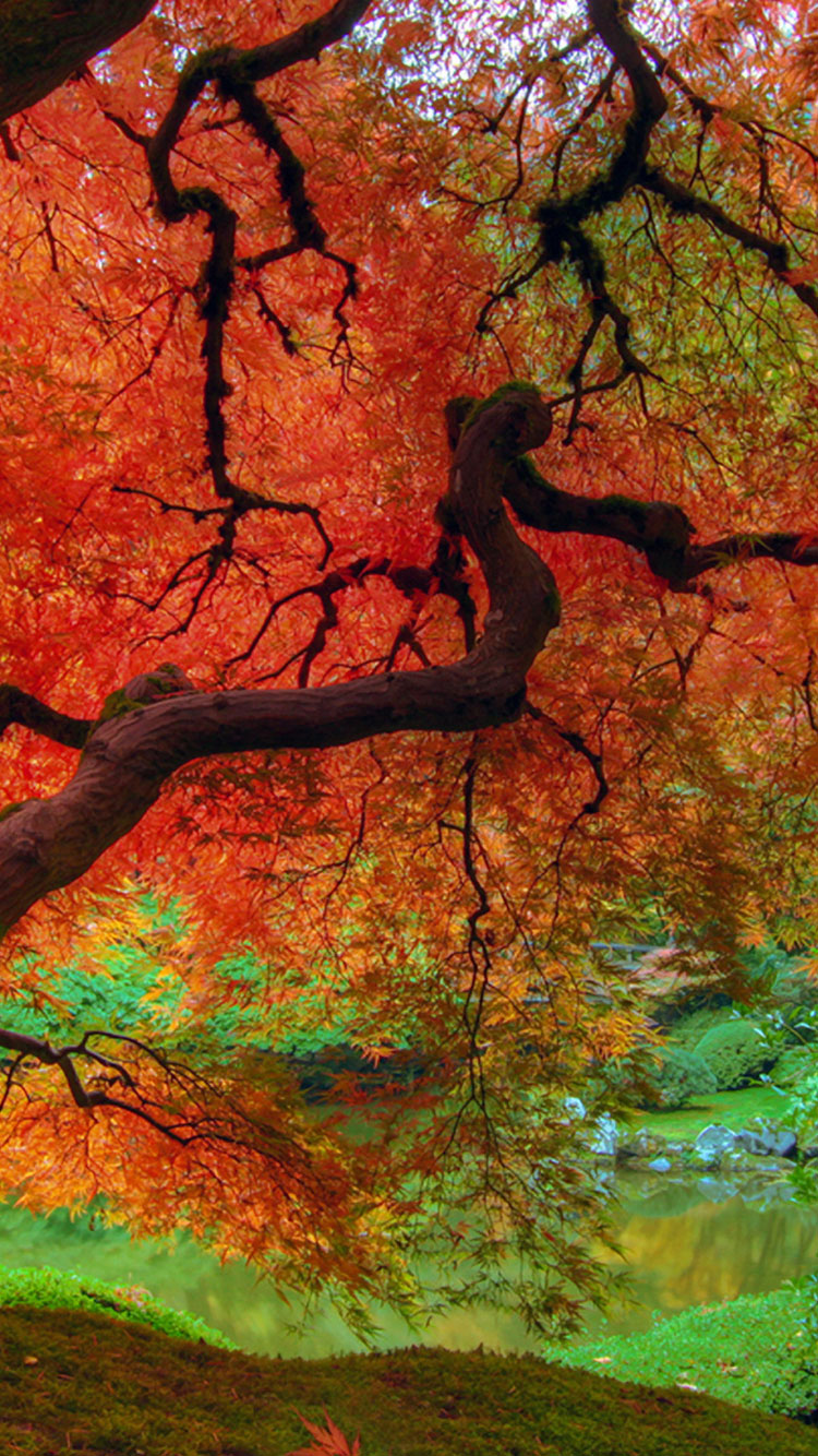 Fall iPhone Wallpaper 3