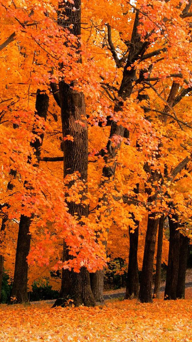 Fall iPhone Wallpaper 5