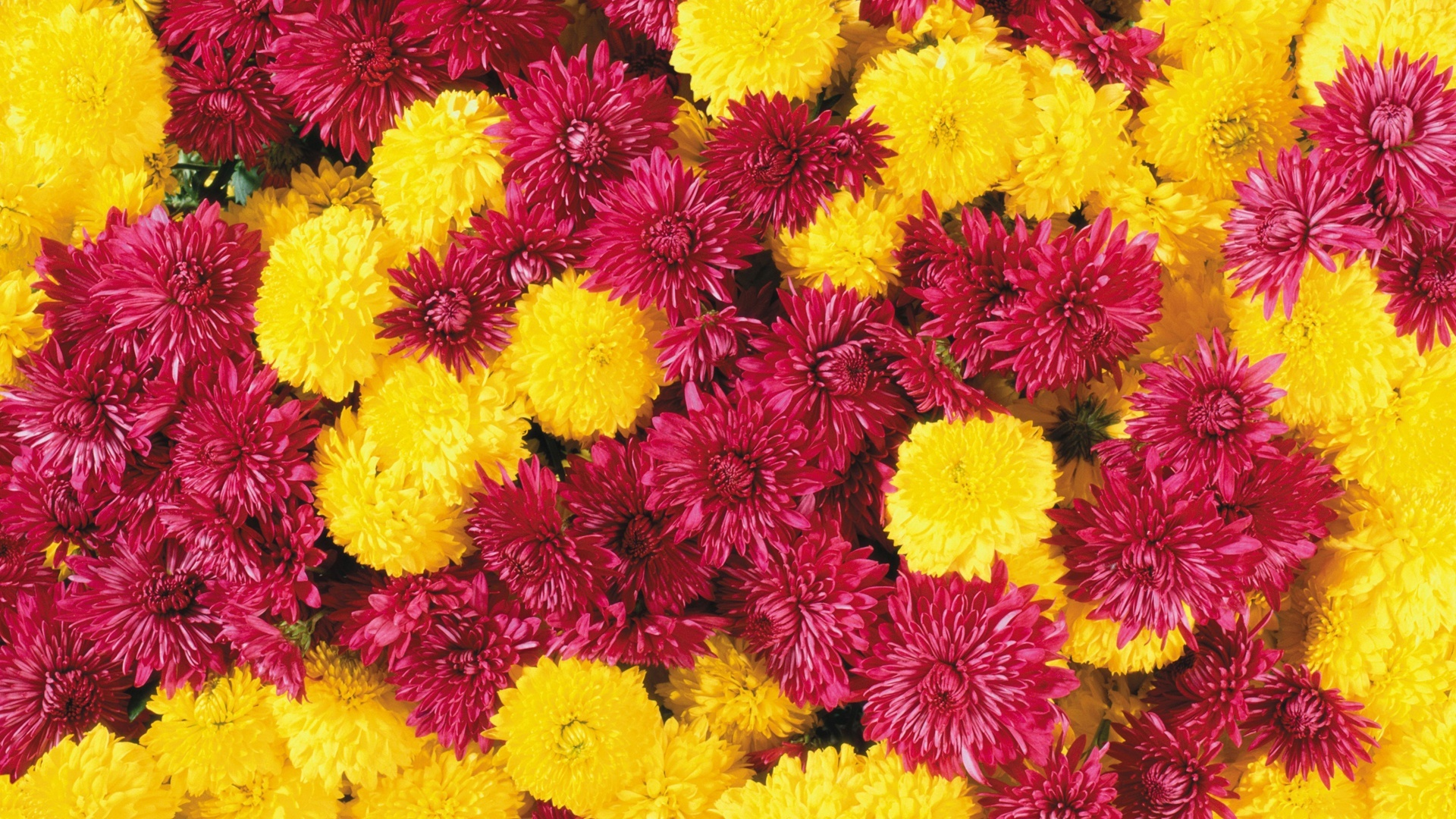 25 Free HD Flowers Wallpapers