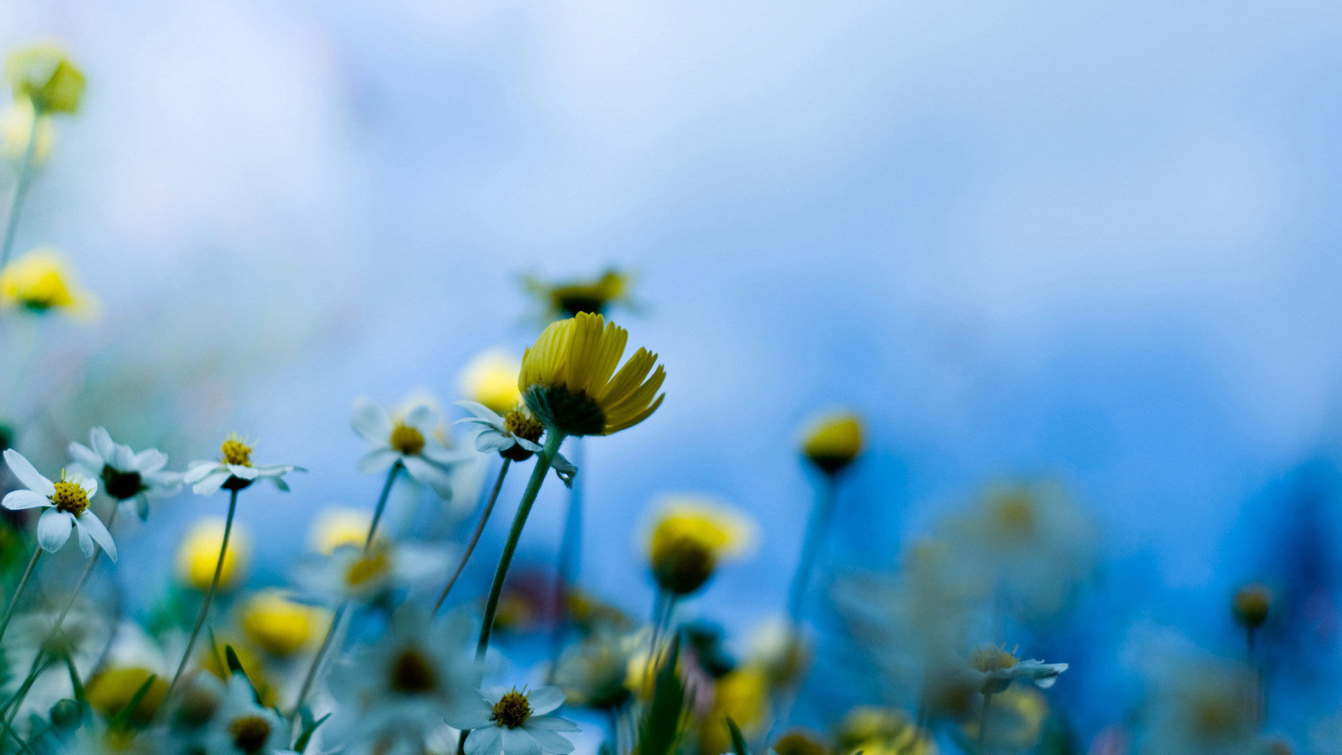 25 free hd flowers wallpapers for Amazing wallpapers for nokia