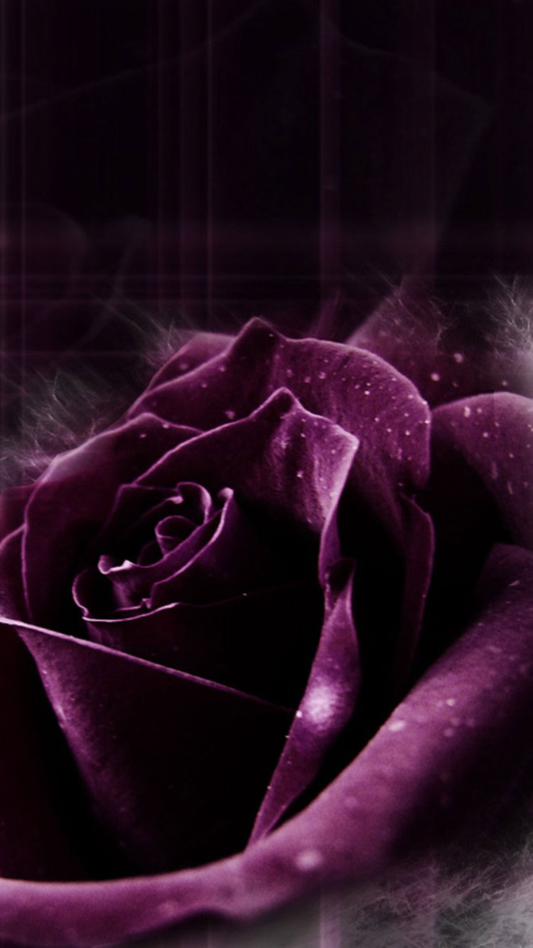 Purple iPhone Wallpaper 30
