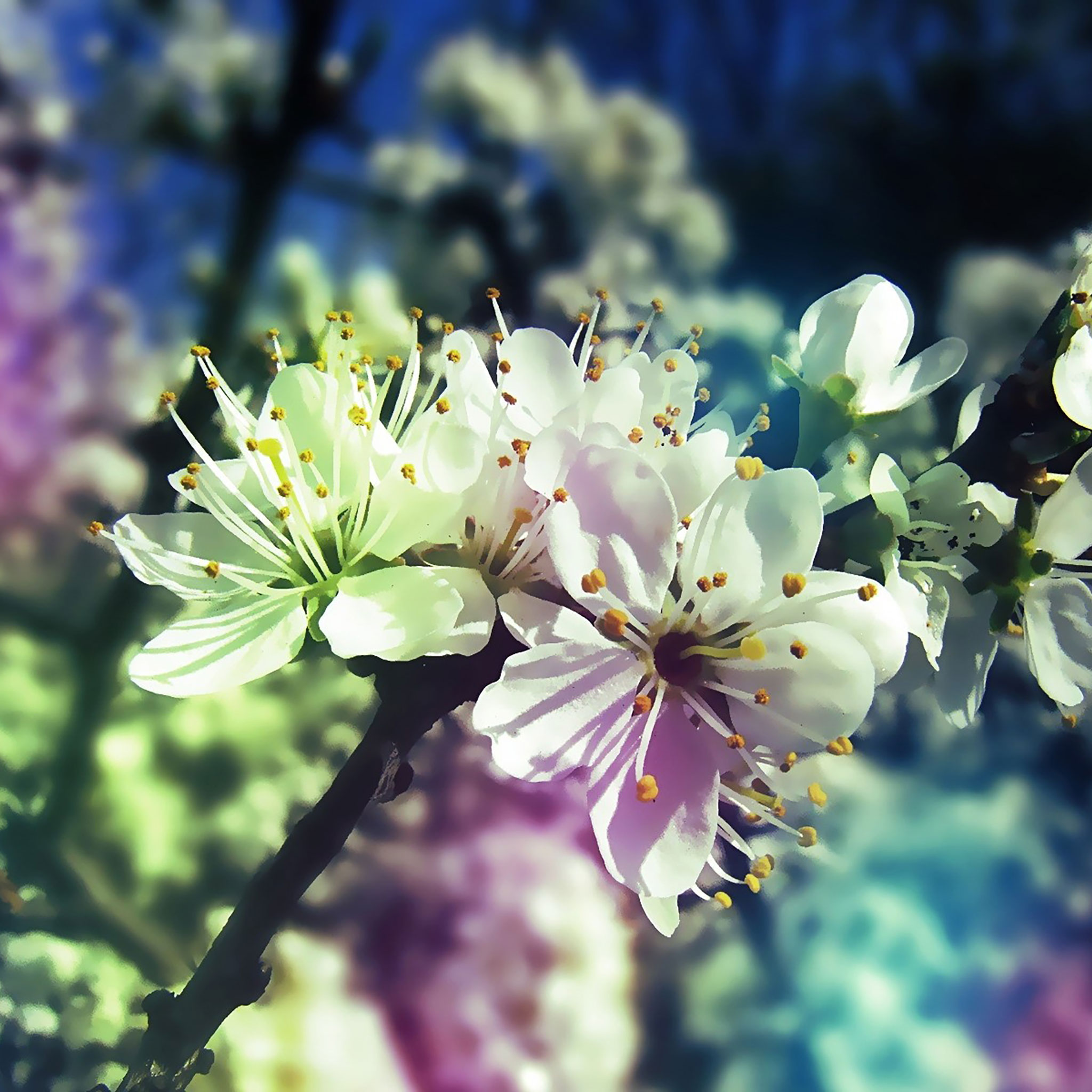 25 Spring iPad Wallpapers
