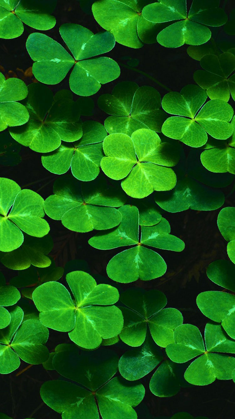 St. Patty's Day iPhone Background 6