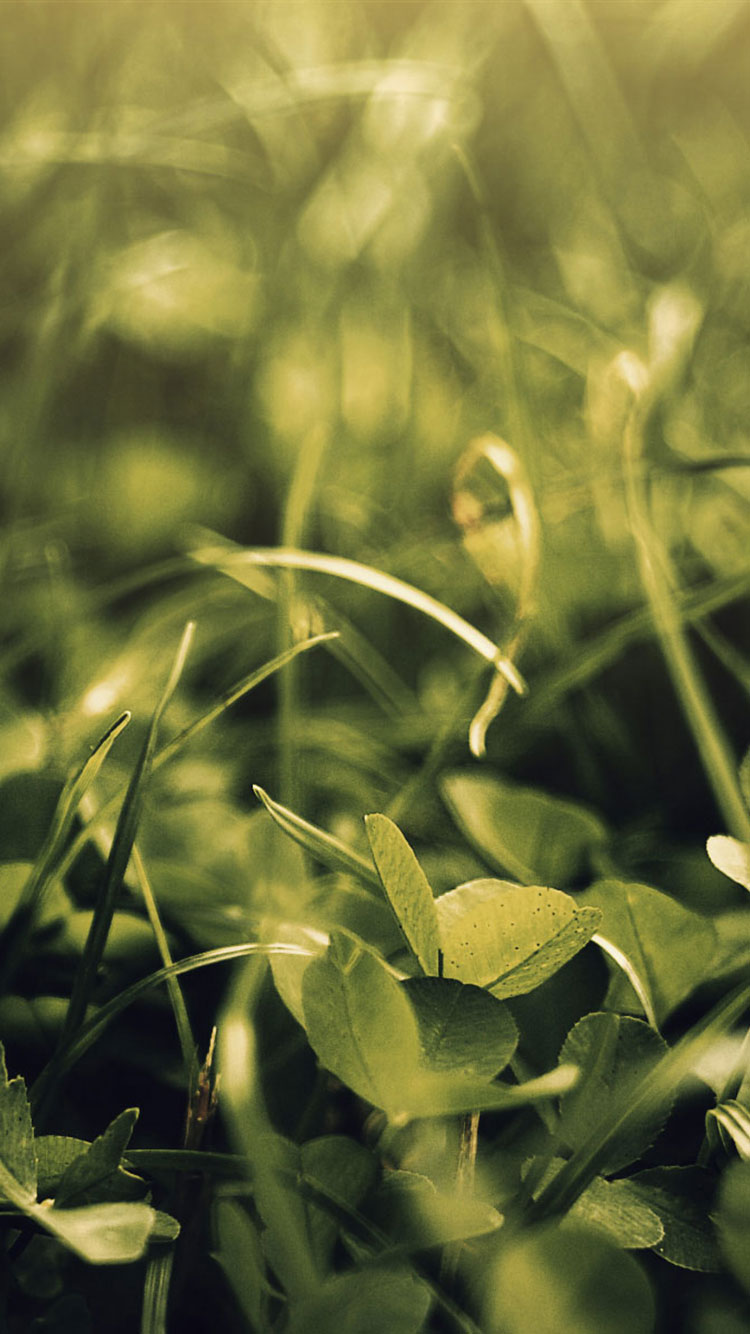 Summer iPhone Wallpaper 23