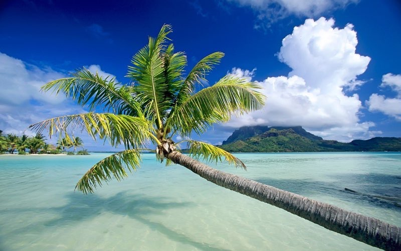 Tropical Beach Background 16