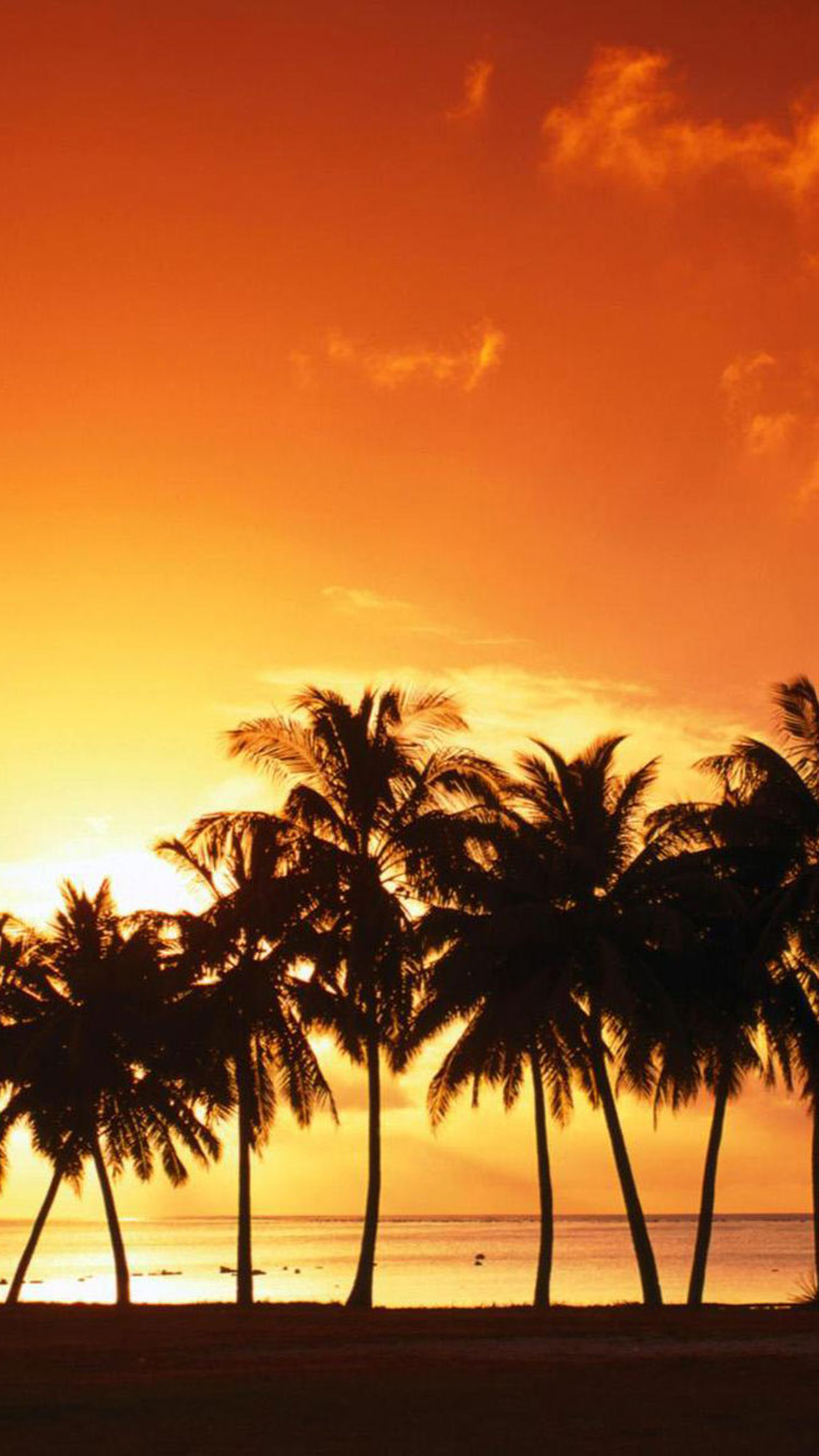 Tropical Beach iPhone Wallpaper 14