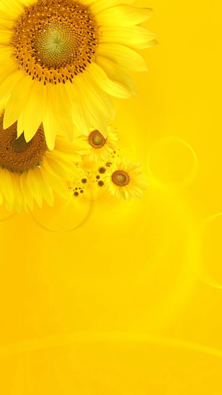 yellow iphone wallpaper 1