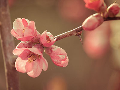 25 Stunning Spring Wallpapers